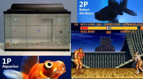Dos peces combaten por ser el mejor del mundo en Street Fighter II